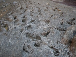 Footprints in the mud-turned-concrete in Carbon Creek Canyon