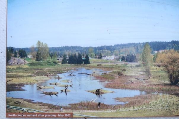 North Campus wetland restoration 2002