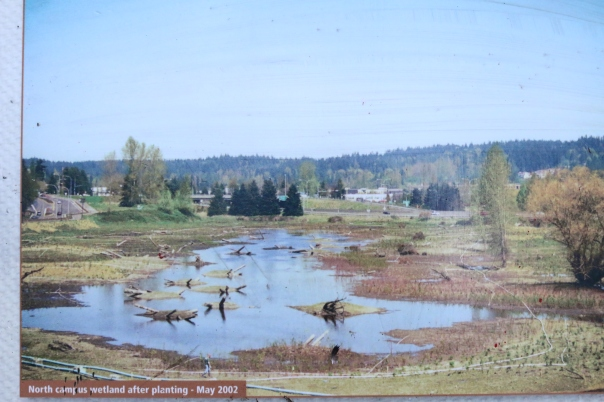 North Campus wetland restoration 2002